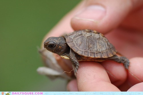 baby not so fast tiny turtle - 6166104832