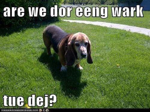 Cheezburger Image 6166139648