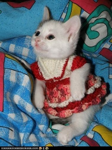 Cats,cyoot kitteh of teh day,dressed up,dresses,knits,Knitted