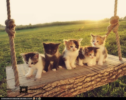 Cats,cyoot kitteh of teh day,lots of cats,swing,swings,swining
