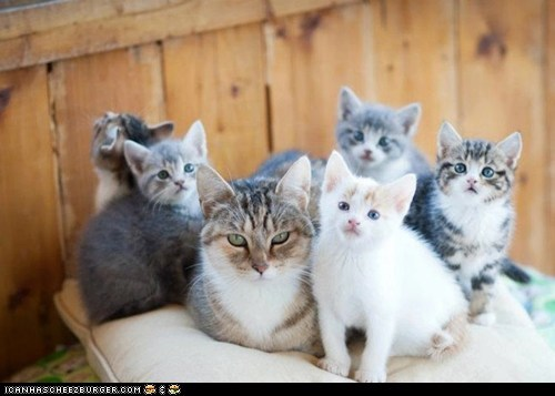 Cats cyoot kitteh of teh day family family portrait kitten lots of cats - 6166213120