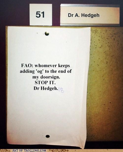hedgehog IRL sonic - 6166415616