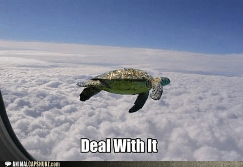 airplane Badass best of the week Deal With It flying Hall of Fame turtle - 6166807552
