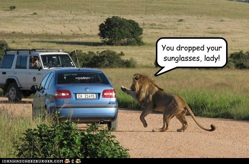 car,dropped,flagging,helpful,lion,misunderstood,wait,wave
