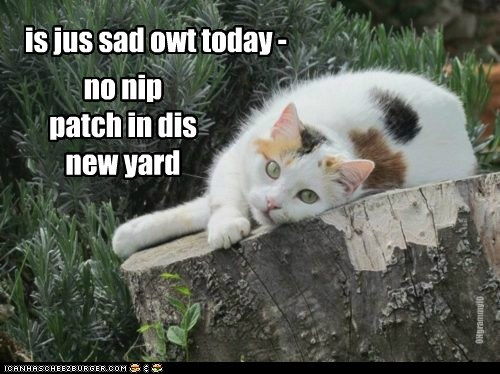 no nip patch in dis new yard is jus sad owt today - OHgrammyIO