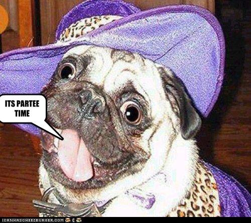 Cheezburger Image 6167676416
