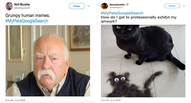 search funny search hilarious dogs lolz twitter wtf random cute funny dogs lol funny cats tweets Cats funny weird google - 6168581