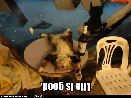 beer calm drunk relax upside down - 6168605440