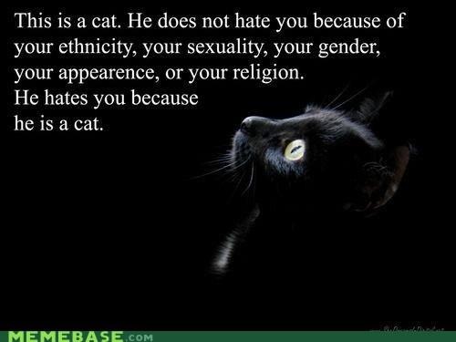 cat hatred Memes neutral - 6169207040