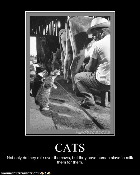 CATS Not only do they rule over the cows, but they have human slave to milk them for them.