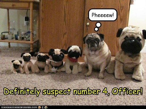criminal,dogs,line up,pug