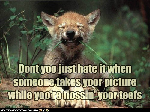 embarrassing flossing grin picture stupid wolf - 6171347200