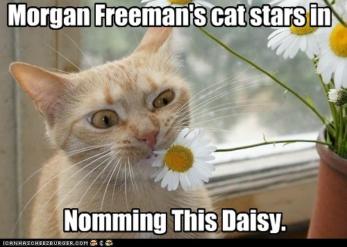 daisy,eat,Hall of Fame,miss daisy,Movie,nom,plant,reference