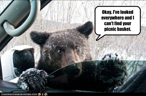 bear,car,charge,everywhere,fee,food,looked,nom,picnic basket,service