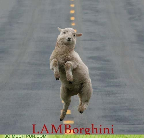 Hall of Fame,highway,homophone,lamb,lamborghini,literalism,prefix,running,sheep