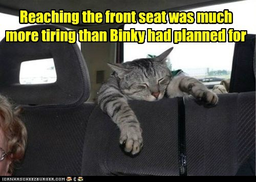 Reaching the front seat was much more tiring than Binky had planned for