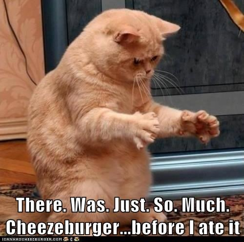Cheezburger Image 6171967744