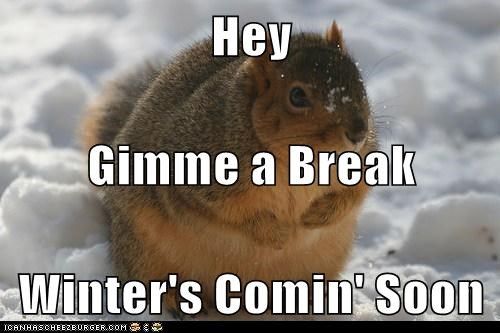 break chubby coming fat squirrel store winter Winter Is Coming