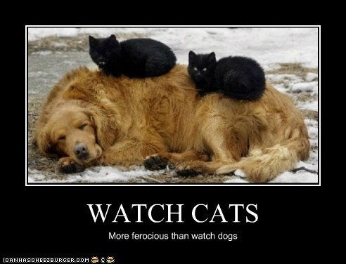 WATCH CATS More ferocious than watch dogs