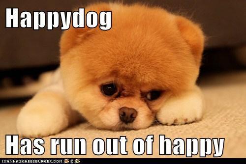 dogs happy pomeranian - 6172855040