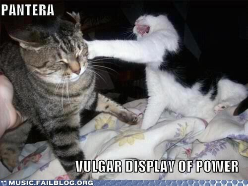animals cat Cats pantera vulgar display of power - 6173574144