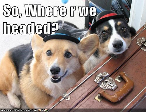 corgi,dogs,hats,on the road,traveling
