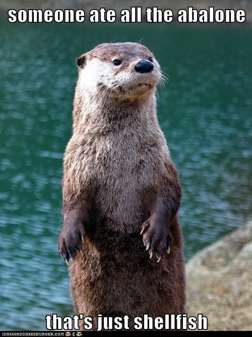 annoyed eating Lame Pun Coon otter selfish shelfish - 6174549760