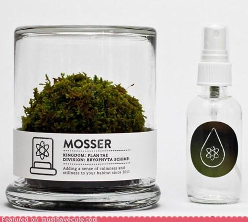 jar mist moss plant sphere spritz terrarium - 6174640896