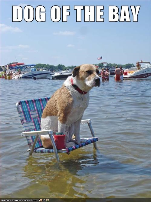 bay chair dogs water what breed - 6174654976