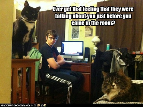 Awkward Cats dorm eyes judge judging judgmental lolcats quiet roommate shh stare talking about you - 6174943488