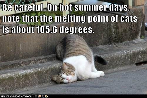 best of the week Cats Heat hot lazy lolcats melt melting sidewalks summer sun temperature - 6175389952
