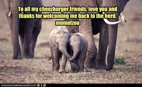Cheezburger Image 6175558400
