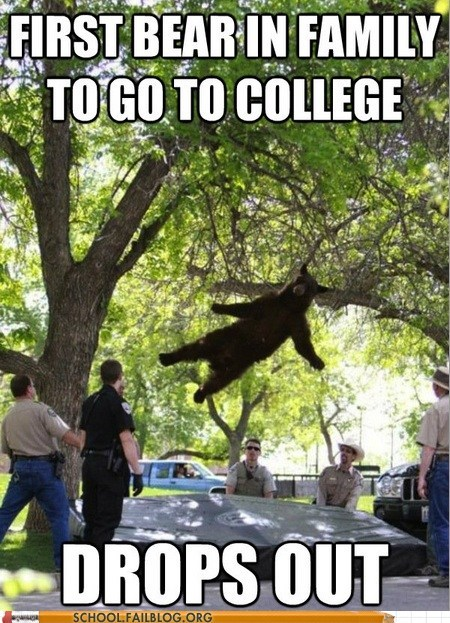 bear college drops out falling bear - 6175614208