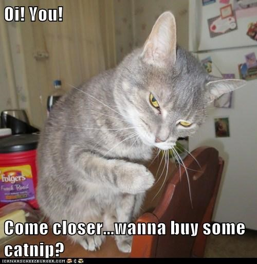 catnip drugs secret sell street - 6175642112