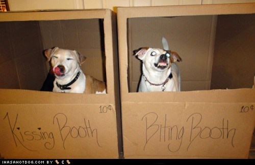 best of the week biting dogs Hall of Fame kissing kissing booth what breed - 6175834112