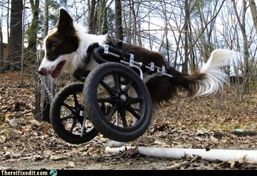 dog bike dog wheelchair g rated Hall of Fame there I fixed it wheelie - 6175949056
