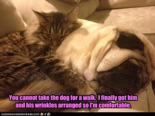 cozy cuddle friends Pillow pug walk - 6176042752