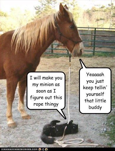basement cat cat confused figure out fooling yourself horse minion recruiting rope struggle - 6176382464