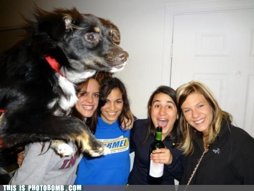animal Animal Bomb bomb dogs jump photobomb level - 6176451328