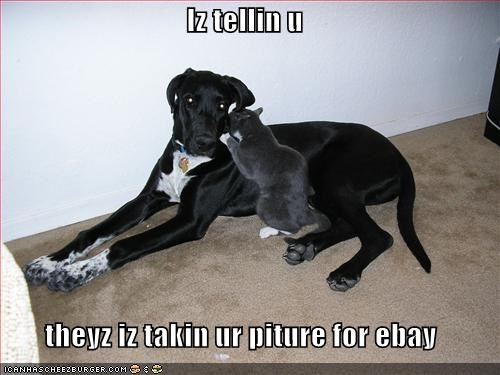 dogs,ebay,grey,lolcats,loldogs