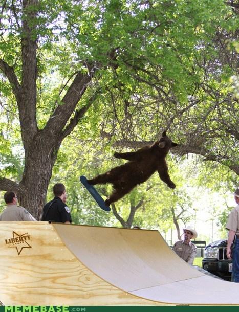 bear,Gravity,Memes,rad,skateboard