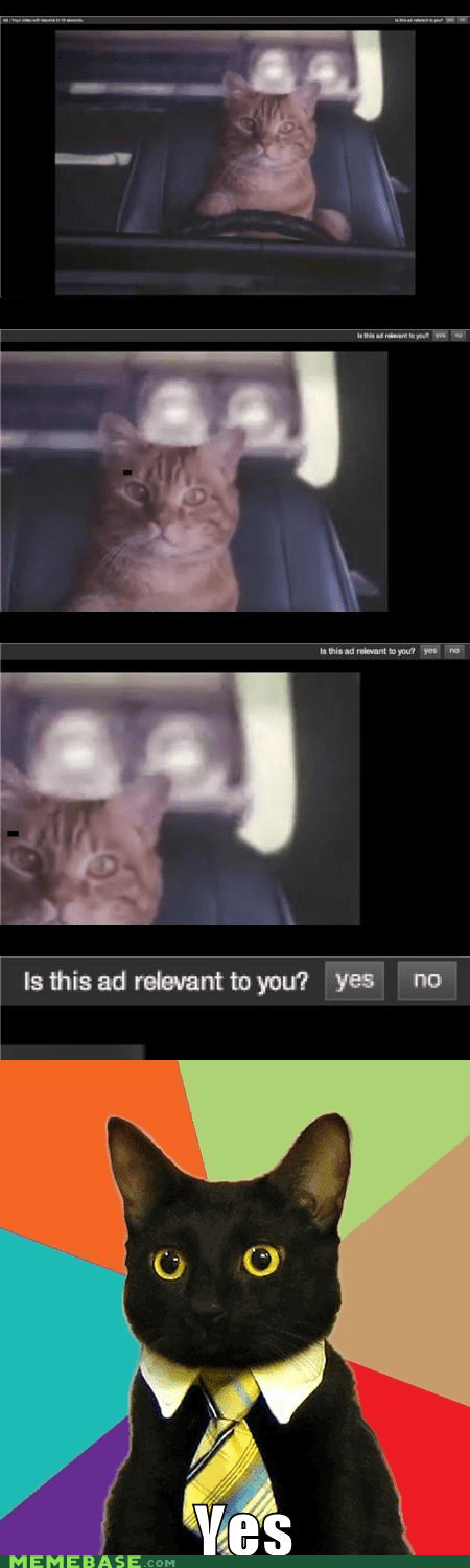 Ad Business Cat car cat driving