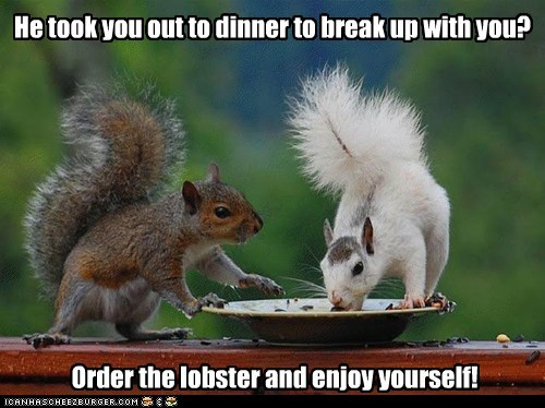 break up dinner eating enjoy expensive lobster squirrels