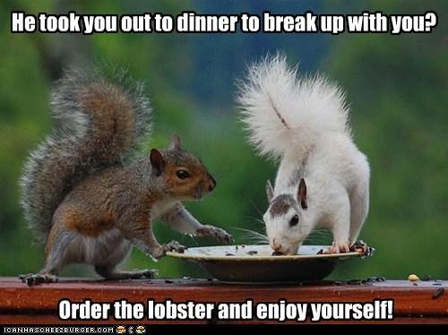break up dinner eating expensive lobster squirrels - 6177246464