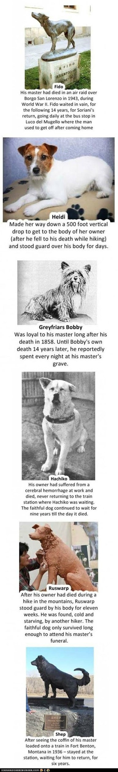 Death dogs inspiring loyal loyalty mans-best-friend Sad sweet