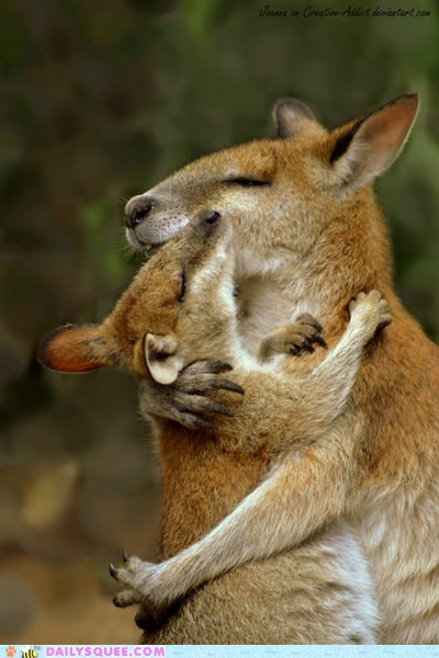 baby hug kangaroo mom mothers day wallaby