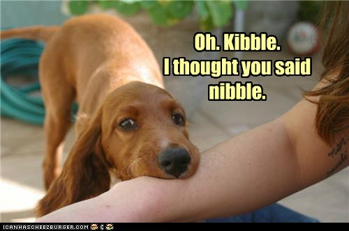 dogs kibble nibble what breed - 6177308672