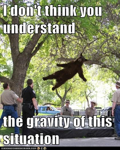 bears,catch,drop,Gravity,puns,rescue,situation,tree,understand