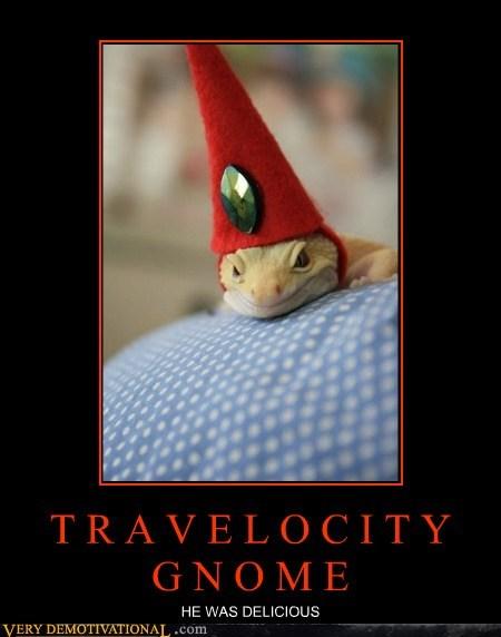 delicious gnome travelocity hilarious - 6177355008