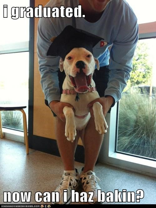 bacon dogs graduated what breed - 6177392896